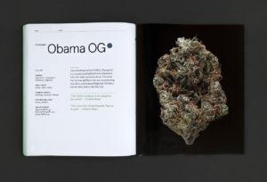 Green A Field Guide to Marijuana Obama OG