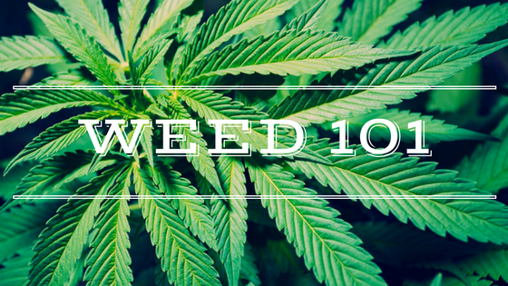weed-101